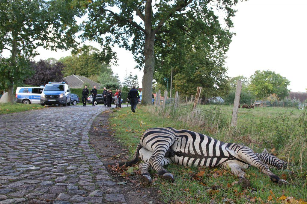 Zebra erschossen
