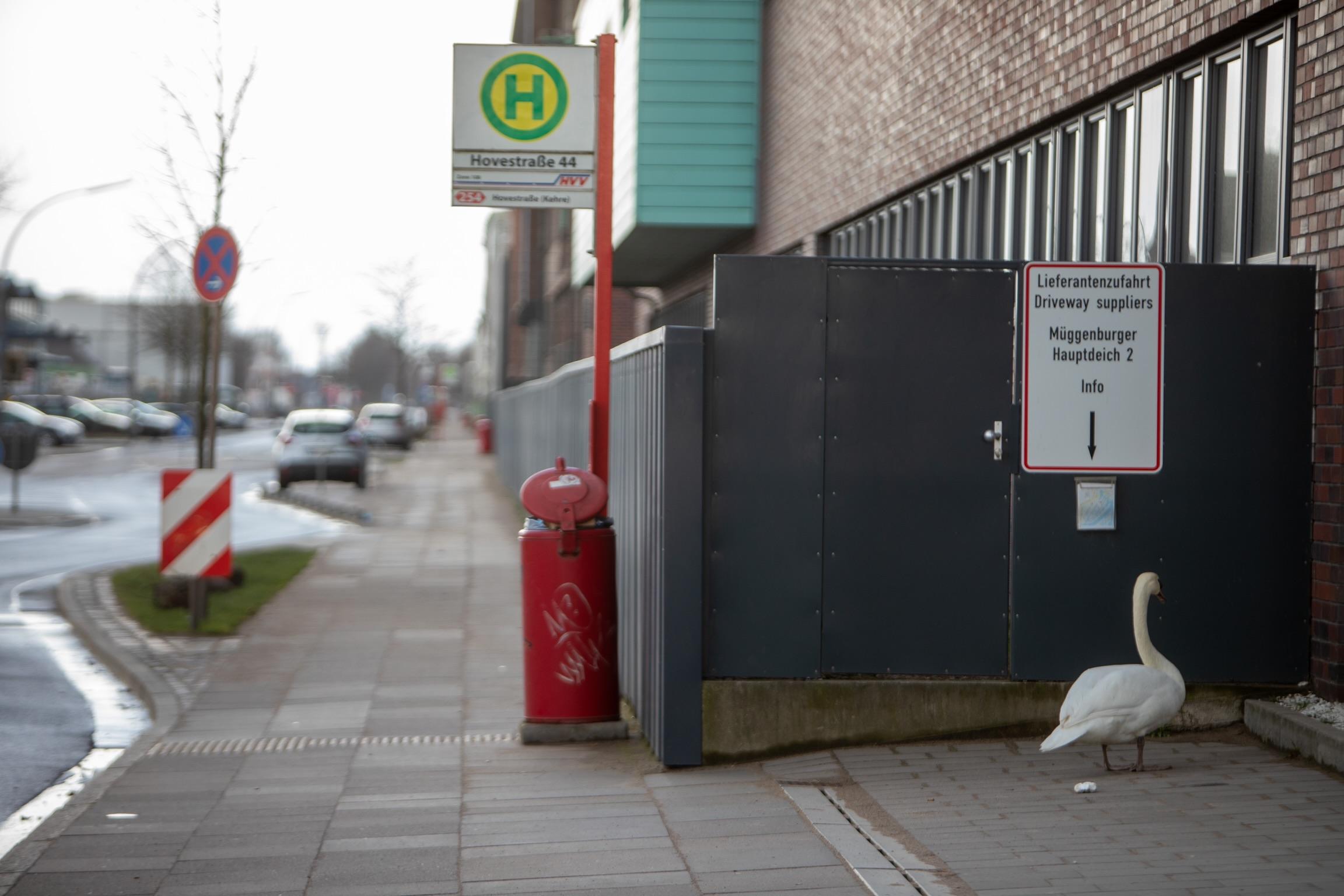 Harte-Landung-Schwan-wartet-im-Hamburger-Industriegebiet-auf-den-Bus